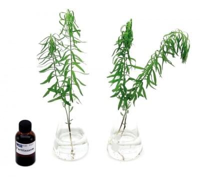 5669 – Sada pro ukázku absorpce minerálních solí v rostlinách