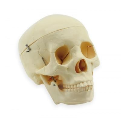 GD0102 – Lidská lebka