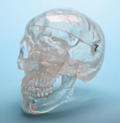 A20/T - Průhledná lebka