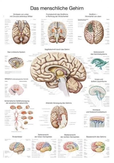 AL114 - Lidský mozek