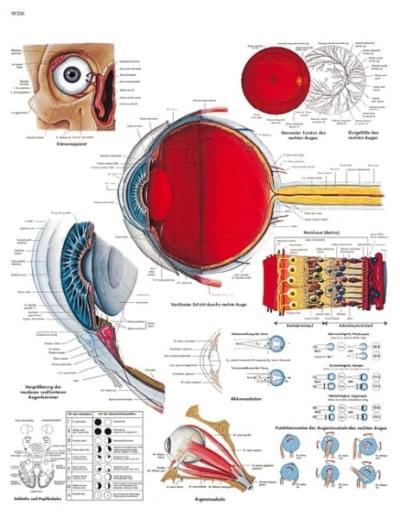 VR1226UU - Lidské oko