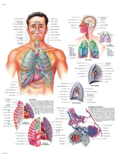 VR1322L - Dýchací systém