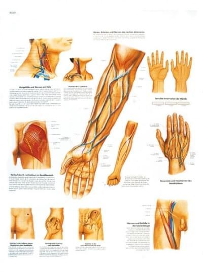 VR1359UU - Klinicky důležité cévní a nervové cesty