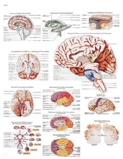VR1615UU - Lidský mozek