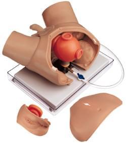AC6/4 - Urologický vyšetřovací fantom pro endoskopické výkony