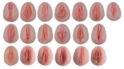 L222 - Odlitky ženských genitálií pro ukázku anatomických odlišností
