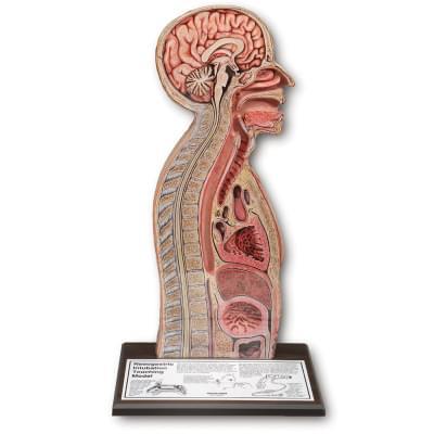 Model nazogastrické intubace