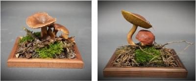 Liška obecná - plastový model