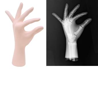 41926-050 - Levá ruka (průhledná)