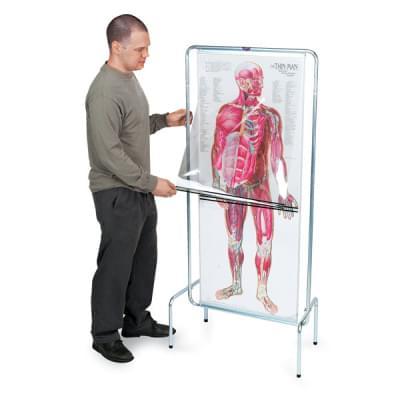 Sekvenční program lidské anatomie