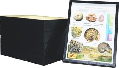 Sbírka fosílií - (4 krabice)
