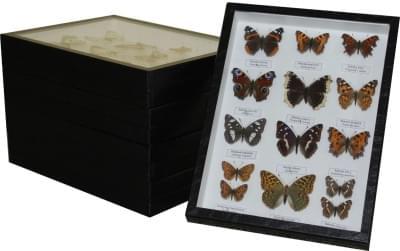 Sbírka motýlů České republiky - (5 krabic)