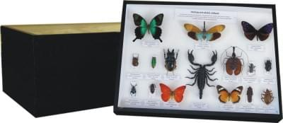 Sbírka světového hmyzu - (5 krabic)