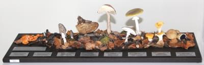 Sada typů plodnic hub