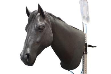 Koňský krk pro venepunkci a intramuskulární injekce